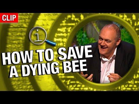Jak zachránit umírající včelu
