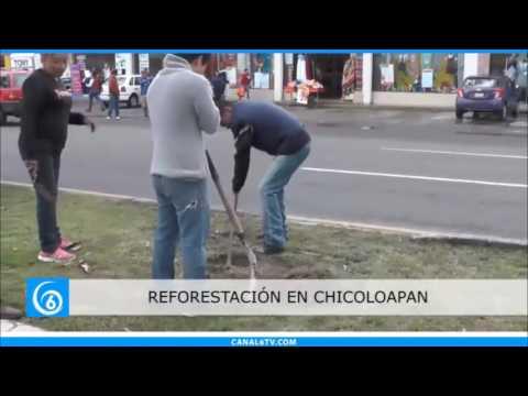 Gobierno de Chicoloapan realiza actividades de reforestación