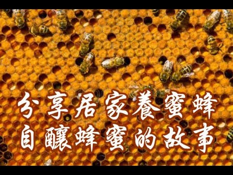 , title : '如何养蜜蜂,酿蜂蜜Raising Honey Bees in Own Back Yard, and Harvesting All Nature Honey!