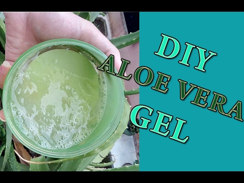 Video DIY Aloe Vera Gel | Cara Membuat Gel Lidah Buaya