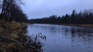 Налим в половодье на реке