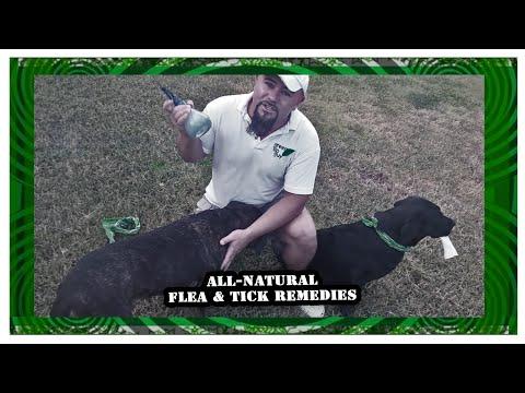 Video Top 3 All-Natural Flea & Tick Remedies