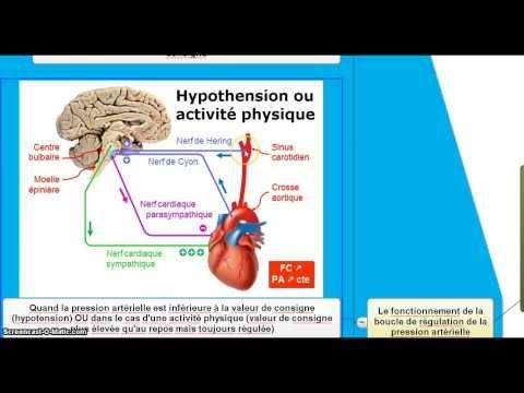 La pression de lhypertension droite et à gauche