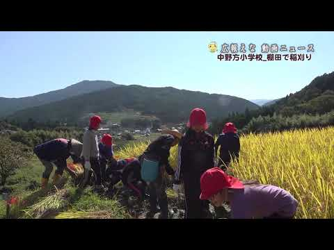 中野方小学校 棚田で稲刈り 2020年9月28日