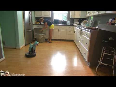 Cat Wearing A Shark Costume Cleans The Kitchen On A Roomba.  Shark Week. #SharkCat cleaning Kitchen!