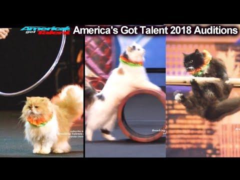 AMAZING CATS ACT Marina Savitsky Cats America's Got Talent 2018 Auditions S13E01 (видео)