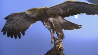 Tawny Eagle - Flight Experiment