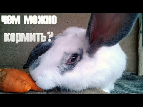 Кролиководство: чем кормить кроликов в домашних условиях?