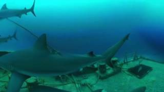 Акулы везде! 360 Видео .MythBusters׃ Sharks Everywhere! 360 Video injected