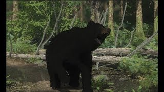 Miscreated - Бой с медведем!
