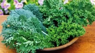 Quick Start Gardening Guide: How to Grow Brassicas