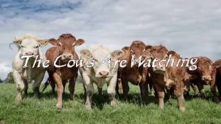 The Cows Are Watching 6
