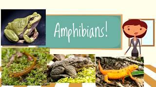 Amphibians for Children | Beginners Classroom Video
