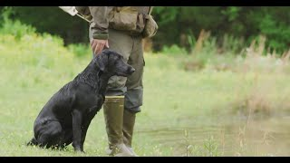 Duck Dog Tip of the Week: How Often to Train