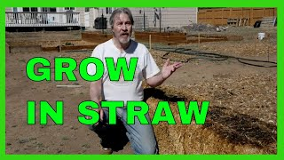 Start a Straw Bale Garden (Complete How-to)