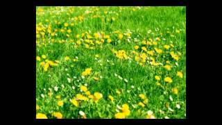 تحميل اغاني Mahmoud Mohey - Fi El Malkoot / محمود محى - فى الملكوت MP3