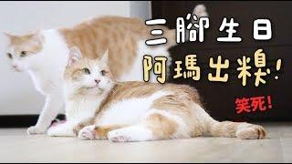 【黃阿瑪的後宮生活】三腳生日,阿瑪出糗!