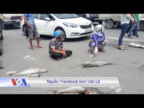 Người dân Bà Rịa đổ cá chết ra quốc lộ để biểu tình