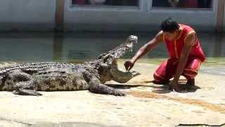 preview picture of video 'Dangerous crocodile show'