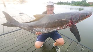 Monster Cobia Fishing + Spearfishing Chesapeake Bay Catch & Cook (Sushi)