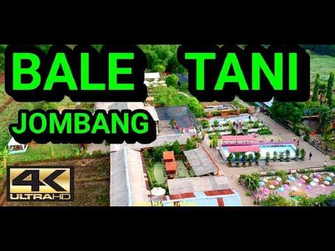 AGROWISATA BALE TANI [4K] - BARENG JOMBANG
