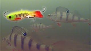Реакция рыбы на Балансир Бабочка Подводная съемка Зимняя рыбалка 2018