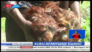 Mtu mmoja apewa kichapo cha mbwa na wanakijiji waliodai kuwa walimpata akimdhalilisha kuku kingono