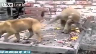 Hài động vật thuyết minh - Tập 15