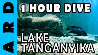 1 hour dive in Lake Tanganyika - Chimba, Zambia