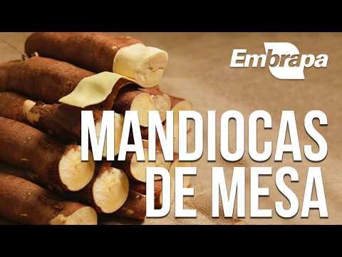 Mandiocas de mesa BRS 396