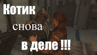 Amazing adventures my funny cat in Skyrim