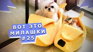 Веселые зверушки #25 Funny pets #25