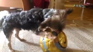 Челси играется с футбольным мячем 2017