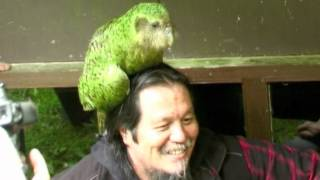 Download Youtube: Sirocco the Kakapo is coming to Maungatautari from 19th August to 26 September 2012