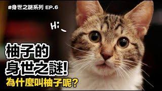 【柚子的身世之謎!為什麼叫柚子呢?】志銘與狸貓