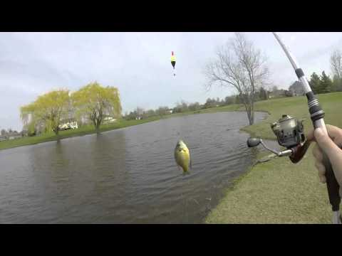 Slip rigging for small pond bluegill and spinnerbait fishing for bass