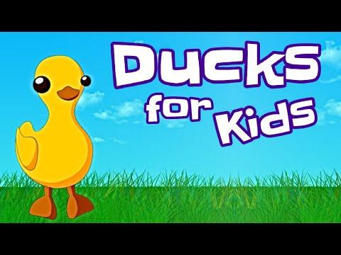 , title : 'Ducks for Kids