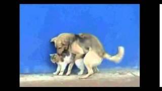 Dog Rape Cat