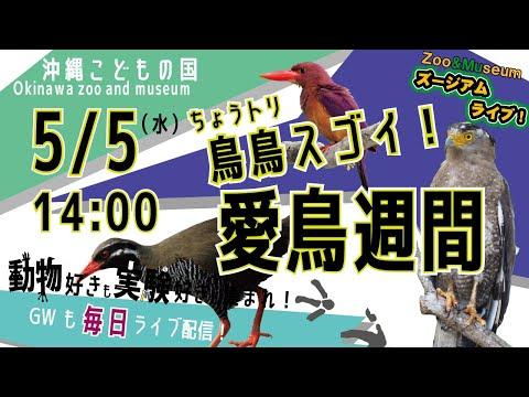 沖縄こどもの国ズージアムライブ!【鳥(ちょう)鳥(とり)スゴイ!愛鳥週間】