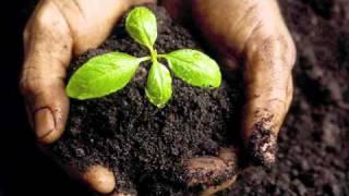 Imbibition - Seed