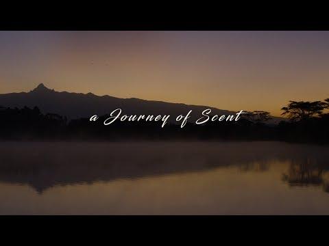 Journey of Scent - Parfum Flower Company