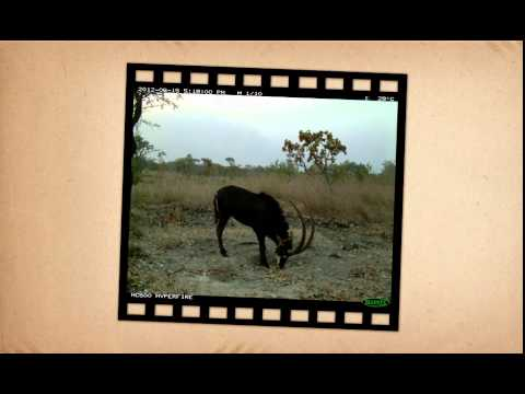Projecto de Conservação da Palanca Negra Gigante