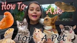 How To Convince Your Parents to Get You A Pet