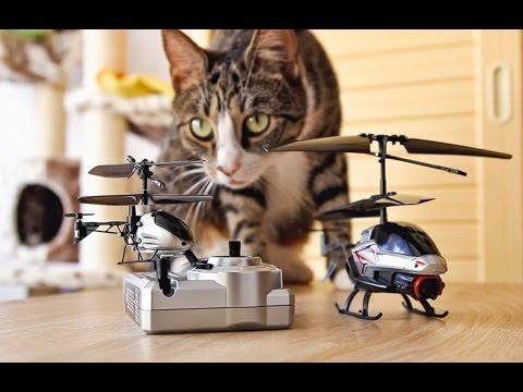 Koty i helikoptery