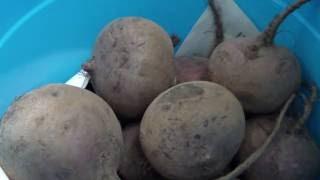 Дозиметр СОЭКС - проверка овощей и фруктов в городе Клинцы. Часть 1.