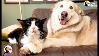 Download Youtube: SAD Dog Loses Cat Best Friend, But Gets 4 Foster Kittens To Take Care Of | The Dodo