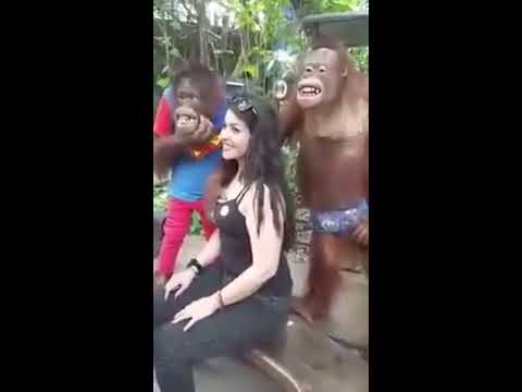 Monkey fucks girl pictures