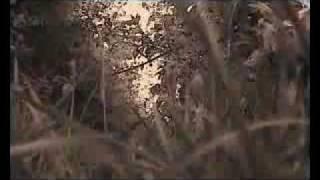 Charlotte Gainsbourg - Little Monsters.flv