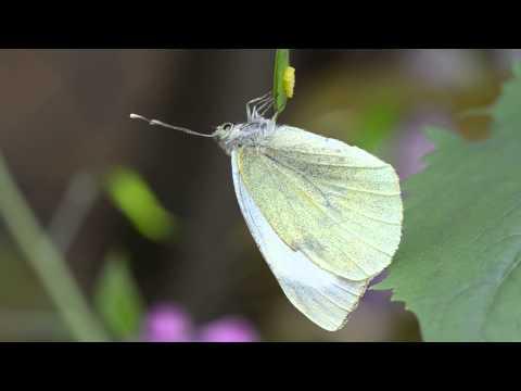 Adattamento di parassiti a vita nellambiente organismal