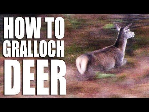 How to gralloch a deer